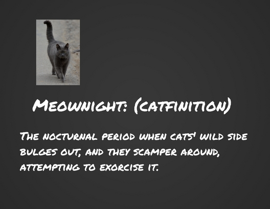 Meownight-